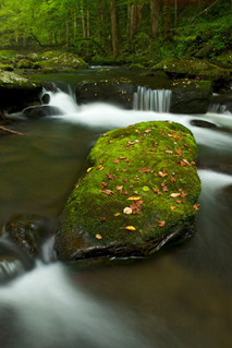 Moss on Rock - (c) Corey Hilz
